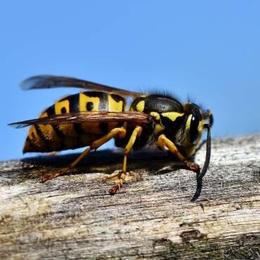 Hilfestellung bei Insektenbefall